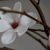 Keväänodotusta