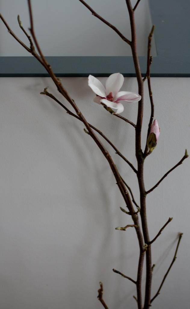 magnolia_p1 (631x1024)
