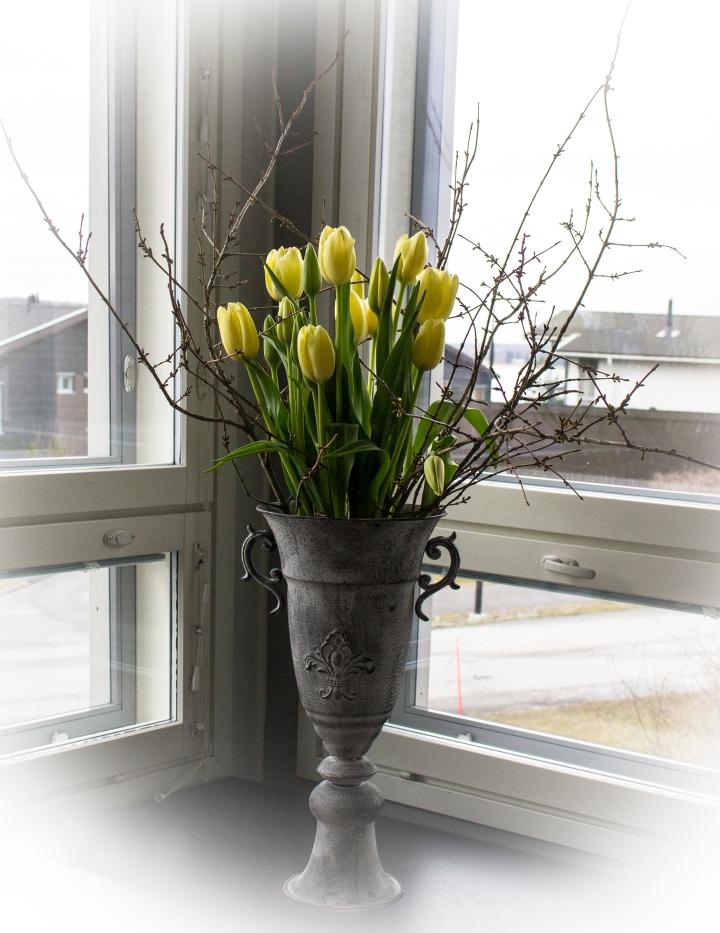 ranskalaiset_tulppaanit_kukkakauppa_katariina