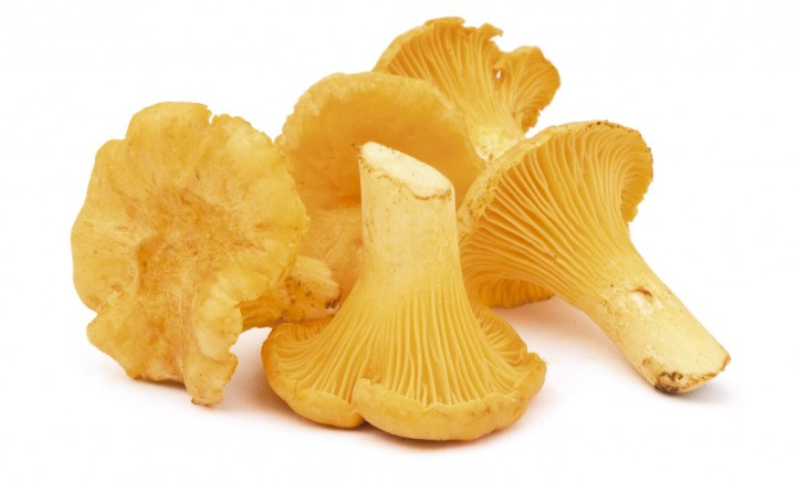 Group of forest mushrooms, isolated on white. chanterelles.